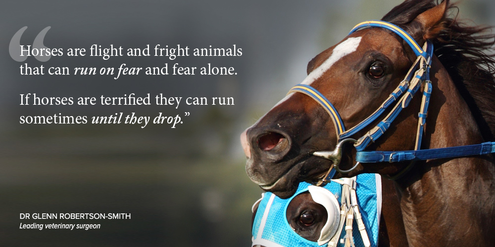horse-racing-fear-run-to-death.jpg