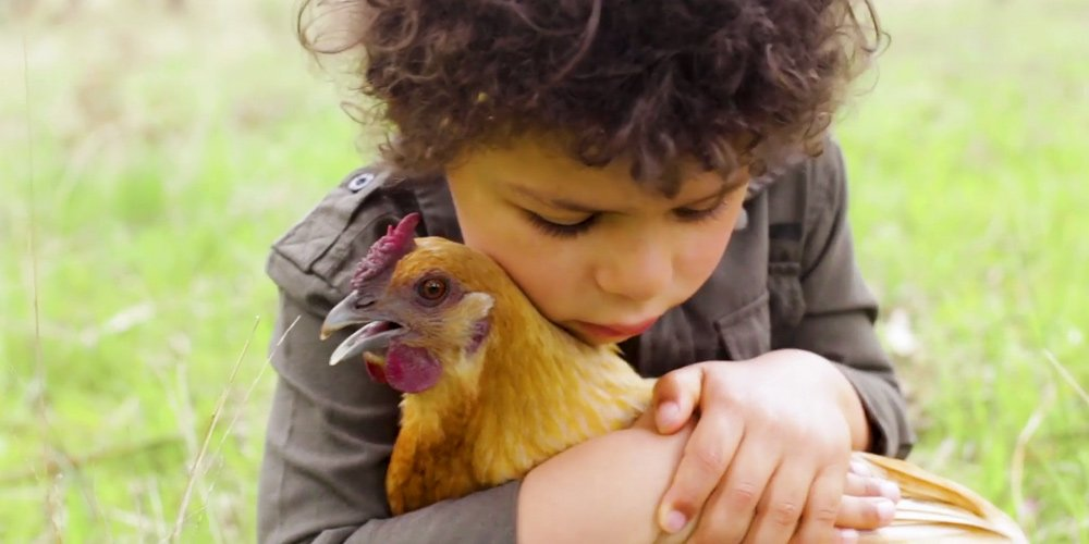 Kind kids spoke up for their feathered friends