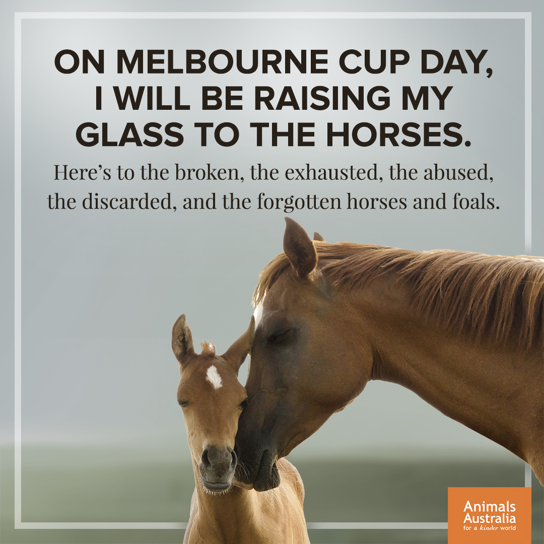 This Melbourne Cup I'm raising my glass to the horses