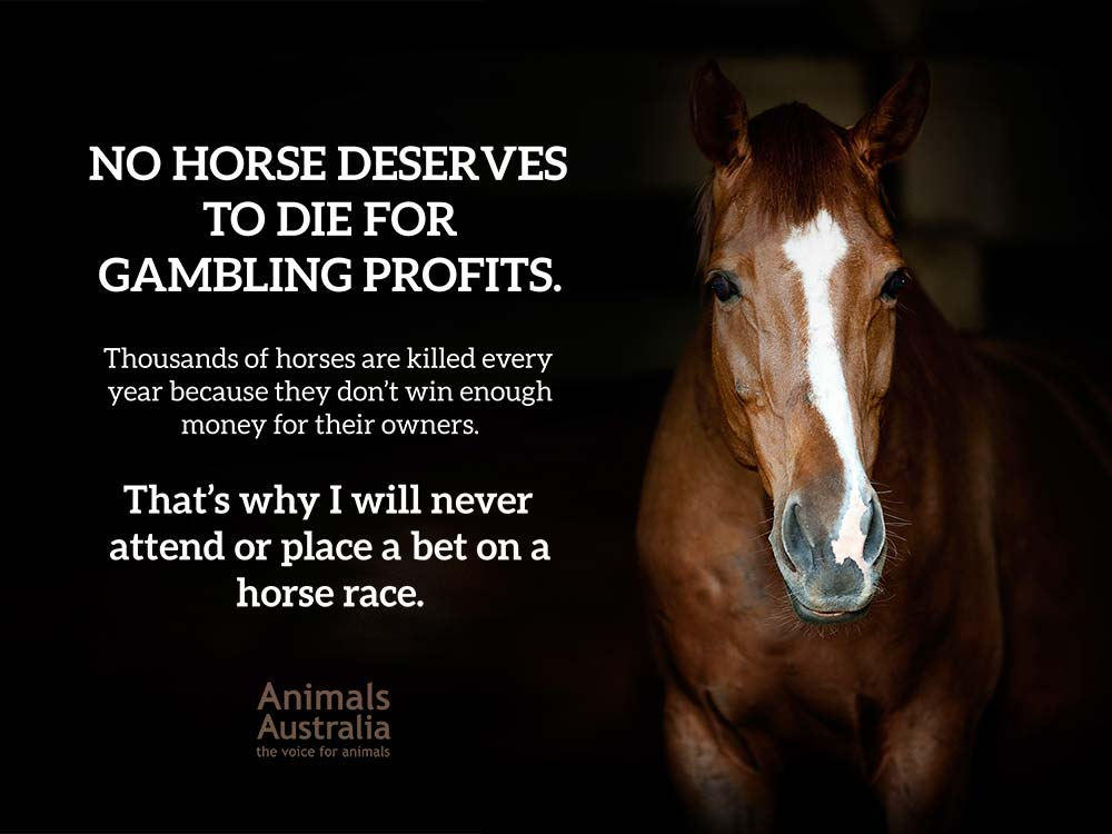No horse deserves to die for gambling profits