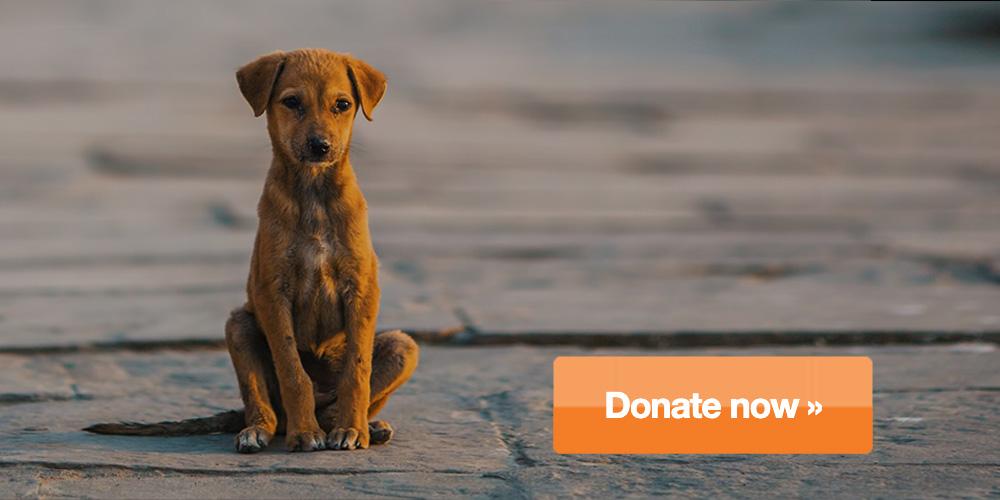 donate-dog.jpg