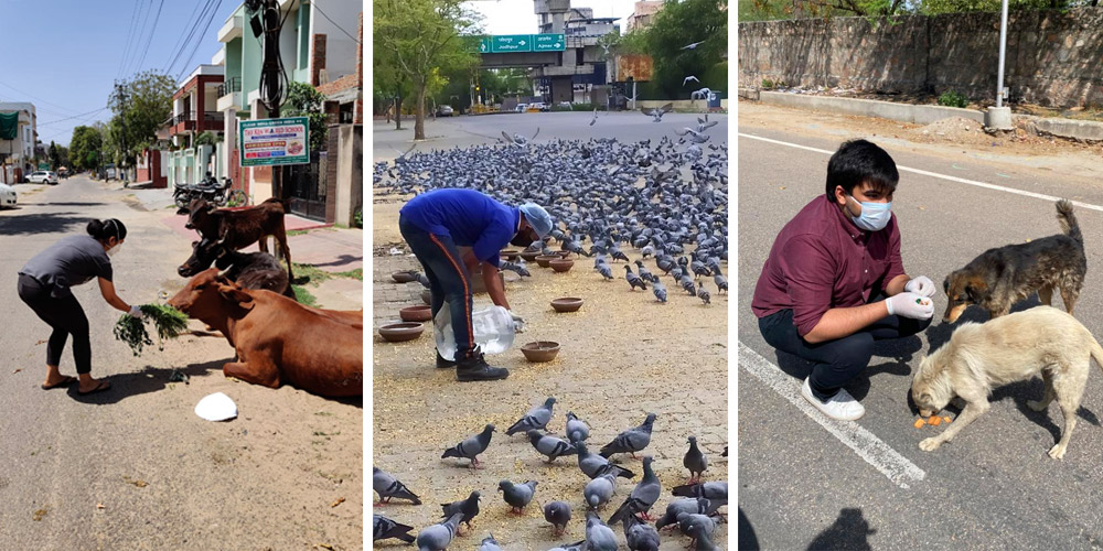 Compassionate volunteers from Help in Suffering - India - are busy ensuring stray and street animals have the food and water they need to survive.