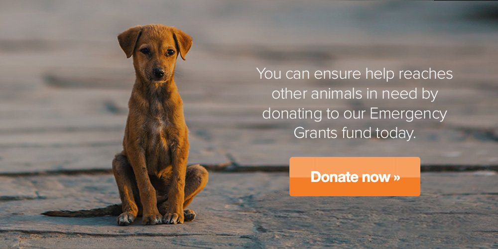 You can ensure help reaches other animals in need by donating to our Emergency Grants fund today.