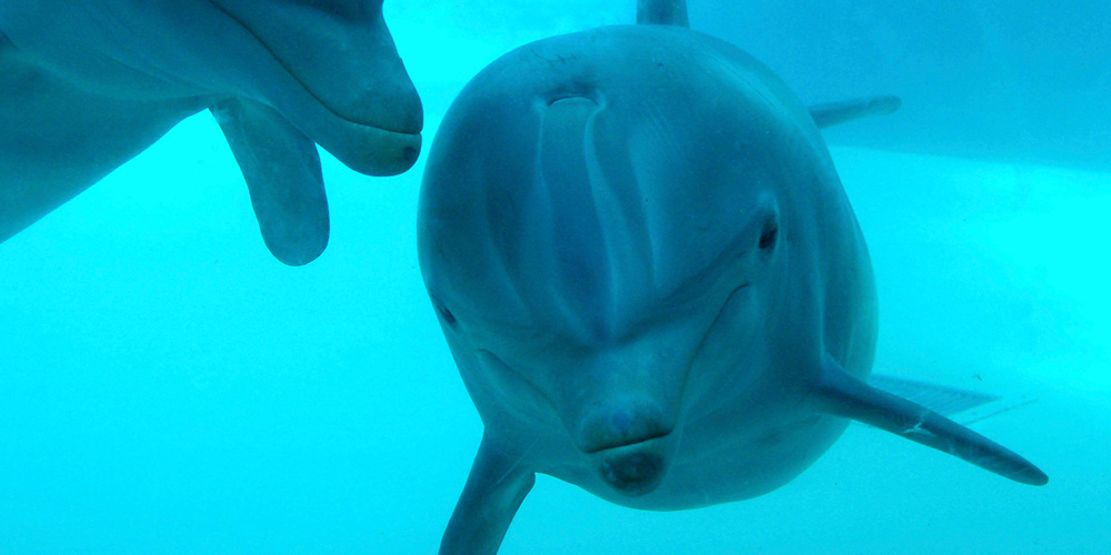 Dolphins find sanctuary in Bali