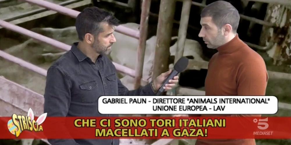 Animals International's EU Director, Gabriel Paun, being interviewed as an investigator and expert witness on Italian TV.
