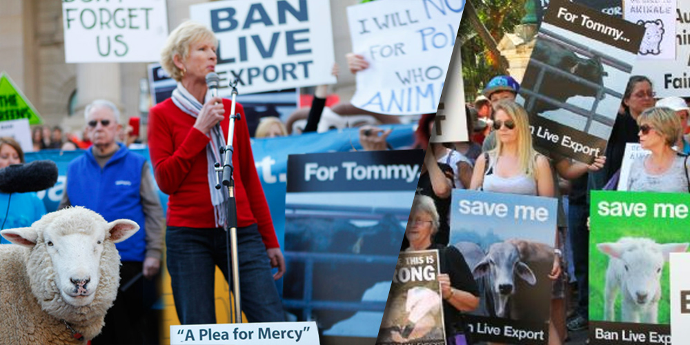 Lyn White at end live export rallies