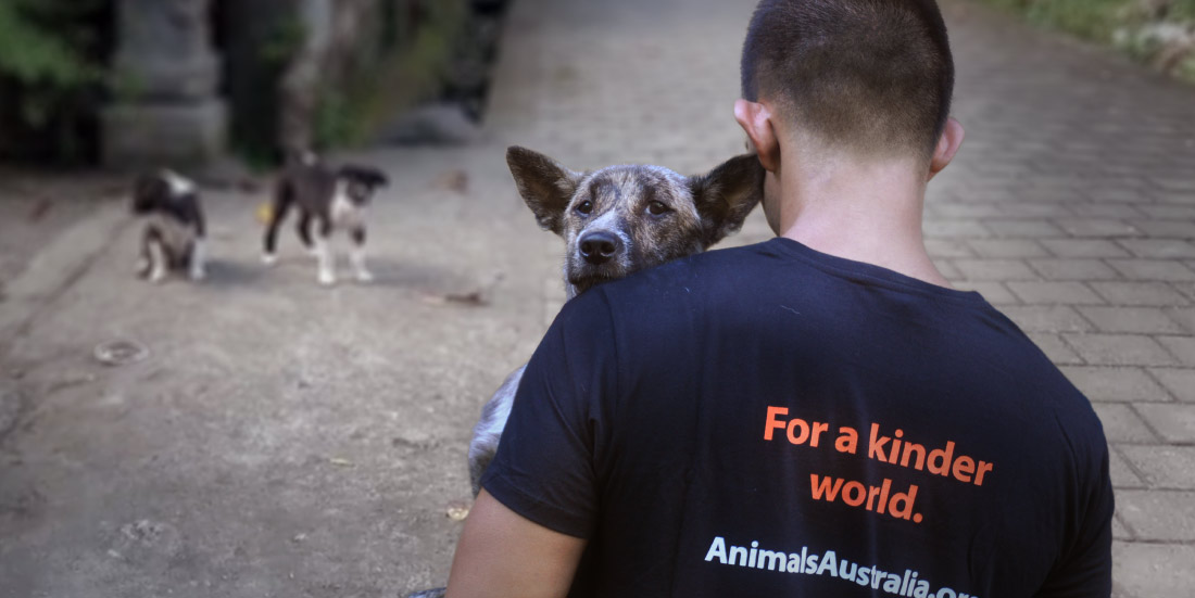 A man in Bali wearing an Animals Australia t-shirt faces away from the camera, gently carrying a brindle and white dog with large ears, who looks over the man's shoulder with a peaceful expression