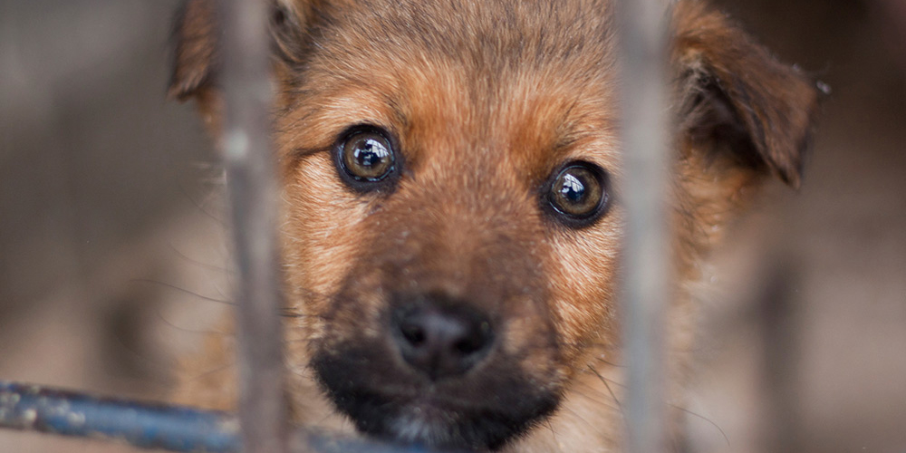 You're helping to break the cruel puppy factory cycle.