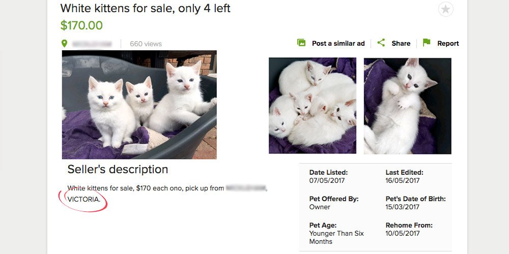 Gumtree ad for kittens in Victoria: missing microchip number.